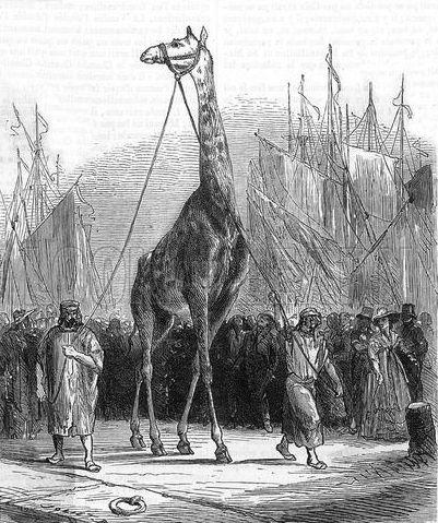 Zarafa the Giraffe