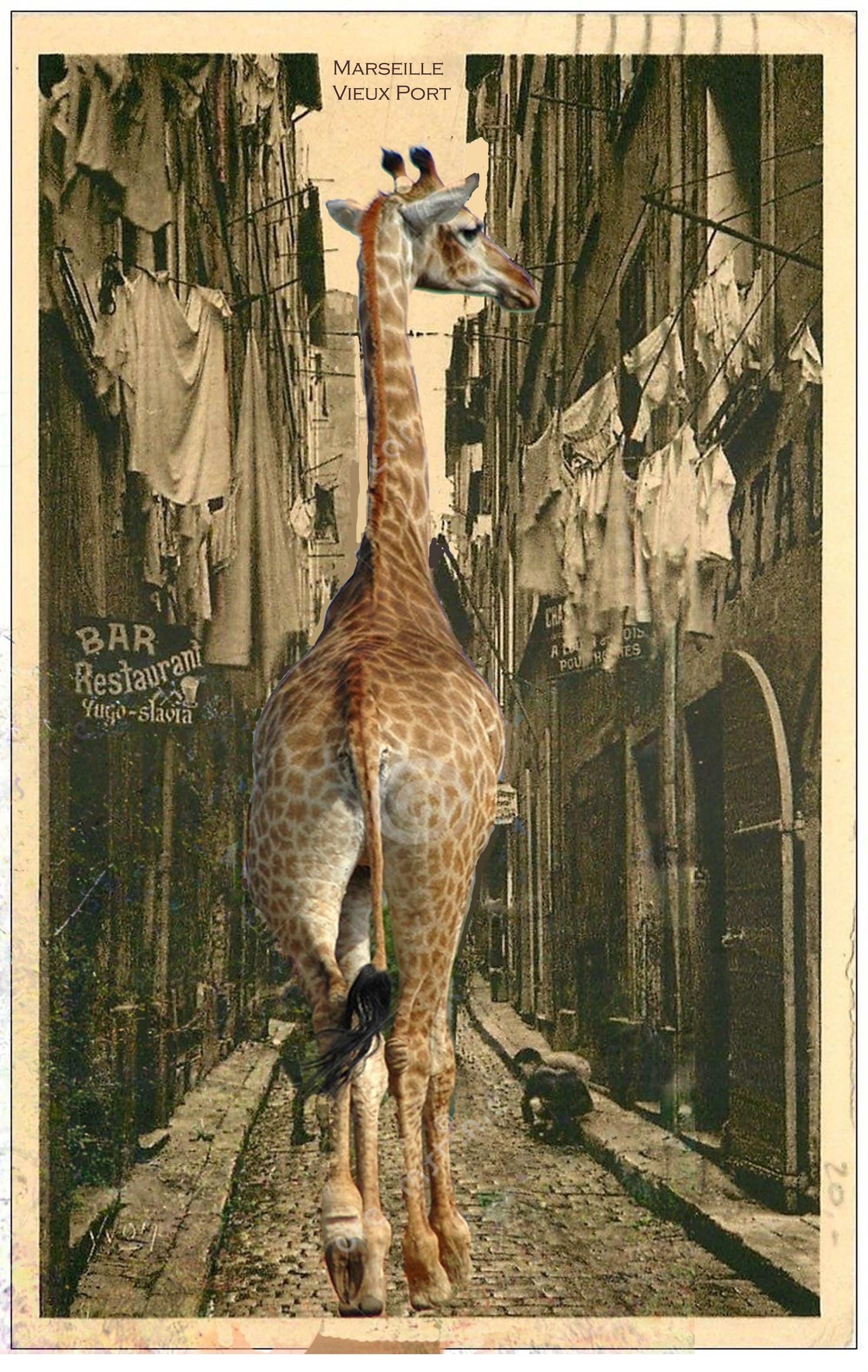 giraffe-in-marseille-vieux-port-copie-8